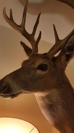 A deer mount was 300 pounds