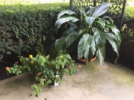 plants for sale