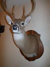 """Bambi's Dad"""