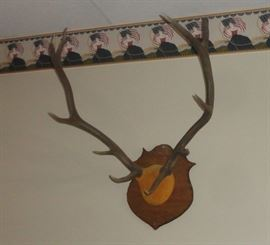 one of several wall mount trophys