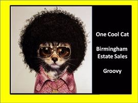 bes one cool cat