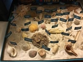 Identified shells!