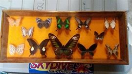 butterfly collection Mounted and framed