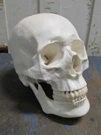 Vintage Medical Human Skull Life Size Replicas