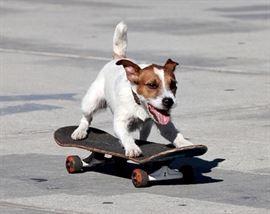 dogskate