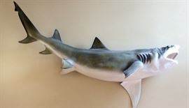 Taxidermy 7ft. Mako shark