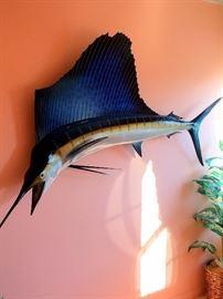 Mounted Fish  - Replica Sail Fish