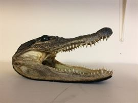 Interesting.......Alligator Head!