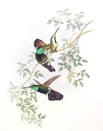 Original John Gould Hummingbird prints