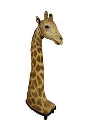 Giraffe White