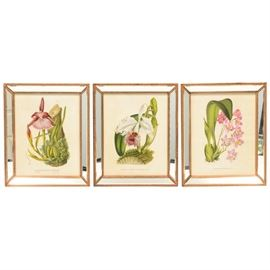 Botanical Offset Lithographs: A collection of botanical offset lithographs. There are three total offset lithographic prints featured in this collection including Cattleya Labiata V. Semialba Lindi, Odonto Glossum Krameri, and Miltonia Spectabilis var Moreliana. Each are presented behind glass and gold tone and mirror wooden frames. Wired and ready to hang.