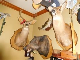 Lots of taxidermy
