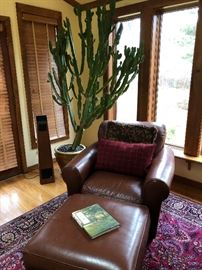 Leather chair and ottoman and a fabulous live catus over 6' tall