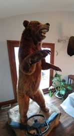 MASSIVE Standing Grizzly Bear Full Mount! FANTASTIC!