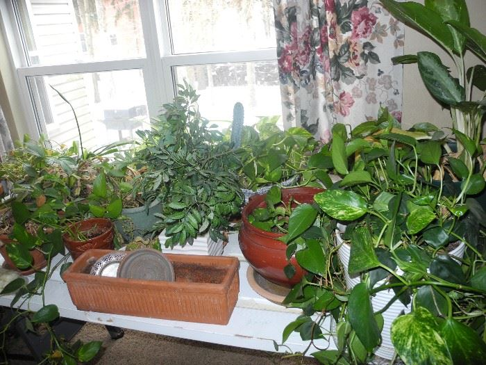 Lots of plants!