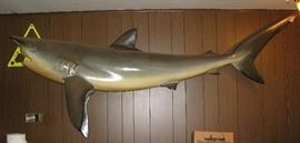 7' full mount shark BUY IT NOW $ 265.00