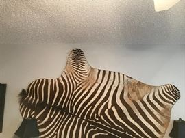 Zebra flat mounted on plywood form.