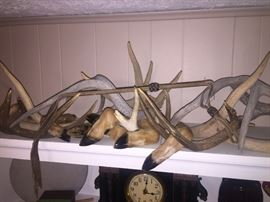 Antlers Deer feet Deer hide