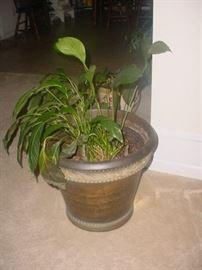 SO MANY house plants
