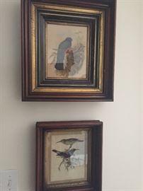 Antique Bird Prints in Walnut Frames