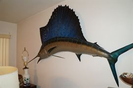Nice large Sailfish taxidermy