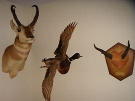 Wildlife taxidermy mounts