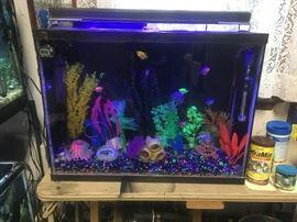 4 large fish tanks, all set up.