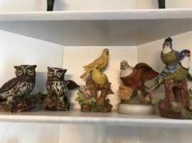 A bird collection.