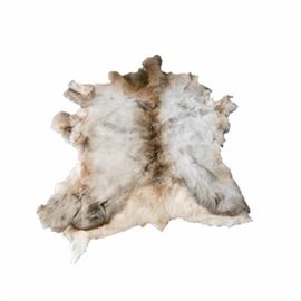 Large Elk Hide