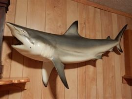 MOUNTED FAKE GREAT WHITE SHARK