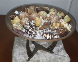 FKT070 Copper Plate with Real Sea Shells Cowry, Cones & More