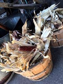 Bushels of Mini Indian Corn...