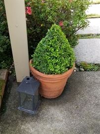 Terra Cotta Pot and Plant