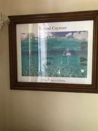 cayman print