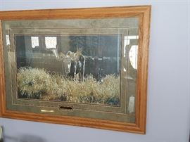 Oak framed print of moose