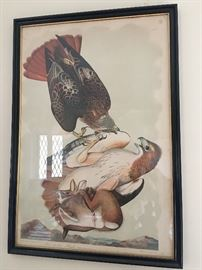 Antique J.J. Audubon Red-Tailed Hawk print. Incredible subject matter! Large-scale, framed nicely, some spotting around the edges consistent with age.