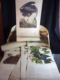 Audubon Bird Plates