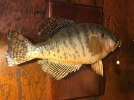 """#12 Fish With Hook In Mouth 14"""" L $65.00"""