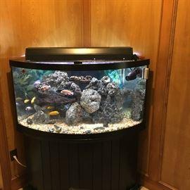 Corner Freshwater fish tank with fish