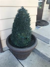 Outdoor Potted Plant