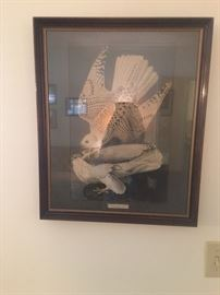 Icelandic falcon print