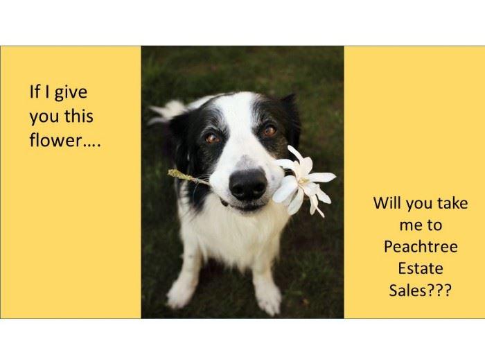 dog flower