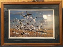 Snow Geese      Michael Steve         Artist Proof  37/95