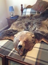 Grizzly bear rug
