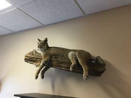 Bob cat trophy