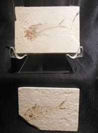 10.	Set of Two Fish Fossils