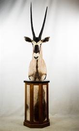 African Gemsbok Pedestal Taxidermy Shoulder Mount