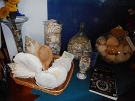All sizes of sea shells..some in jars..some loose..