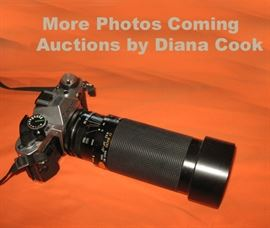Diana Cook, Auctioneer