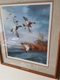 Canvasbacks - Atlantic Flyway by David A. Maass - signed and numbered.
